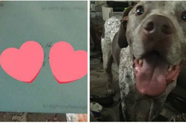 Apollo, il cane che ha fatto rinascere un amore finito
