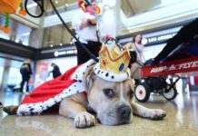 Cane da Pet Therapy in aeroporto