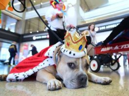 Cane da Pet Therapy in aeroporto