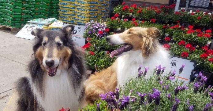 cane e giardino