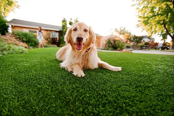 Ayurveda per cani: cos'è? Come funziona?