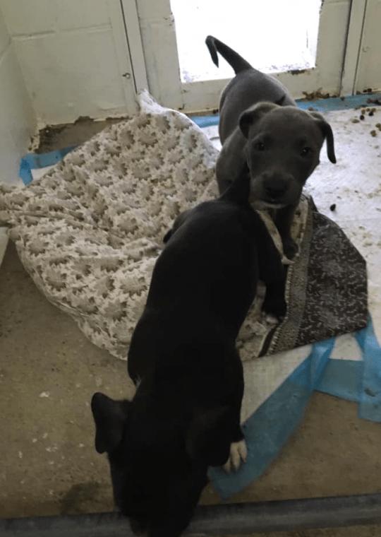 Cane abbandonato gabbia cuccioli