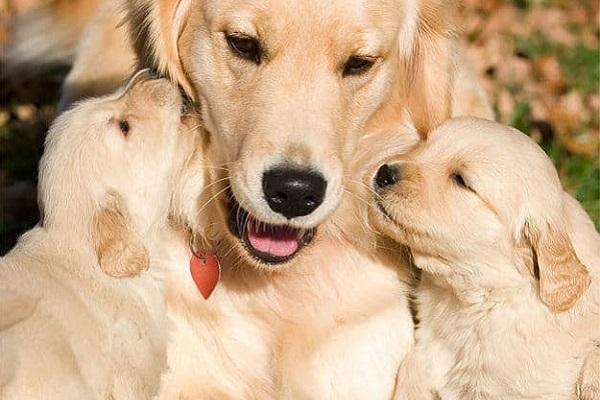 Cosa sapere sul tuo cane di 4 anni: cure, attenzioni e bisogni