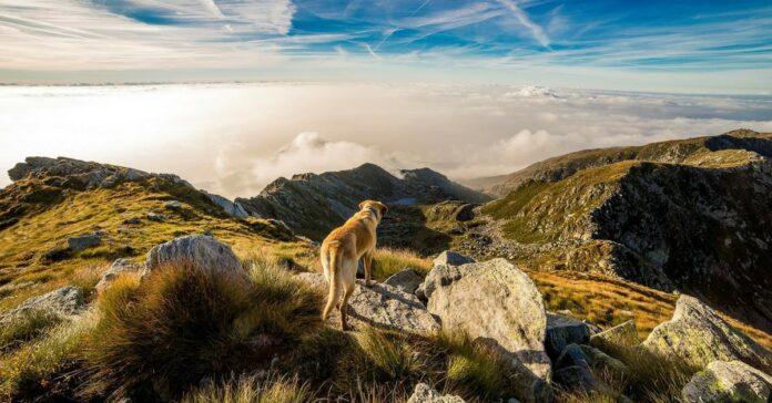 cane e paesaggio