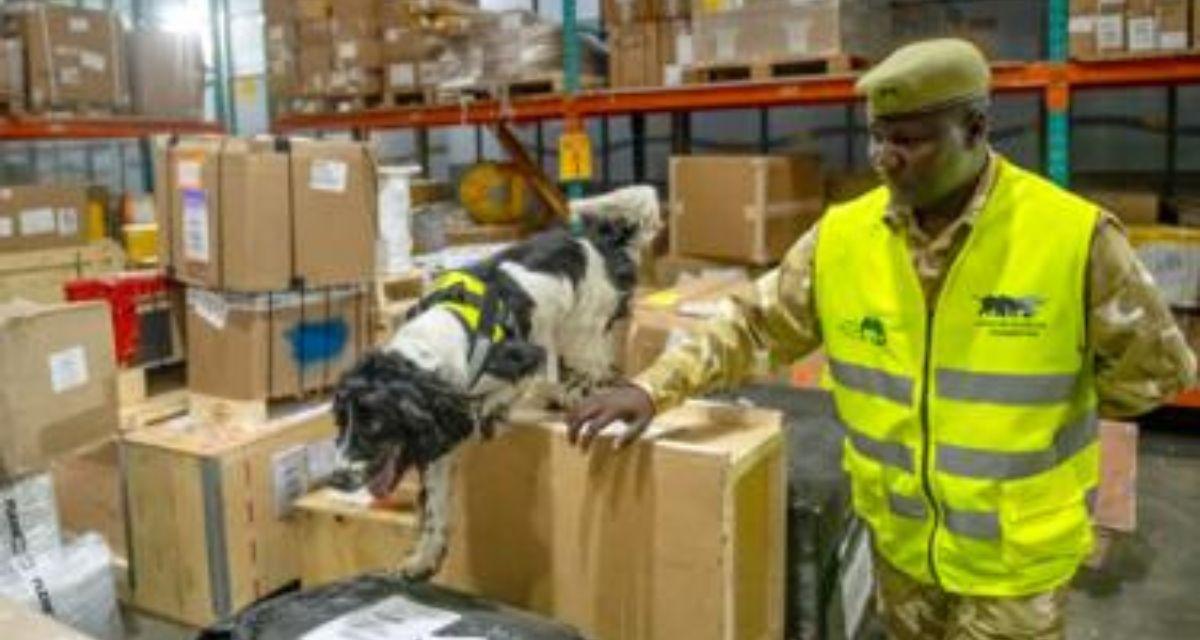 Cani contro bracconieri Africa
