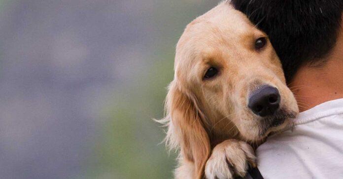 cane non sta bene