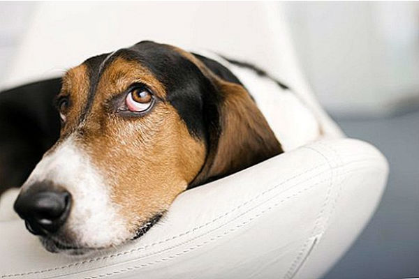 Canigen Puppy: cosa sapere sul vaccino contro il parvovirus