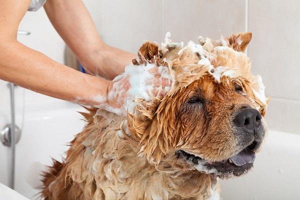 cane dentro la vasca da bagno