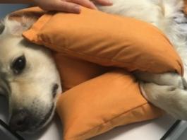 cane dal medico