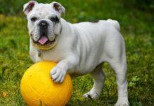 cane e palla