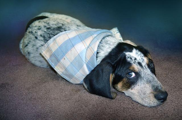 Enfisema nel cane: tutto su questa patologia polmonare