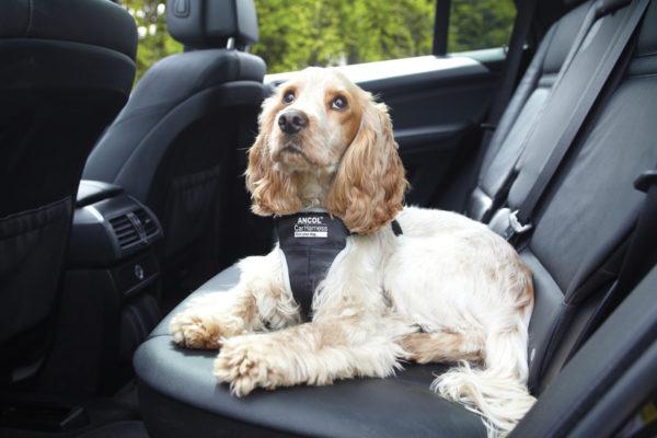 Farmaci comportamentali per il cane: a che cosa servono?