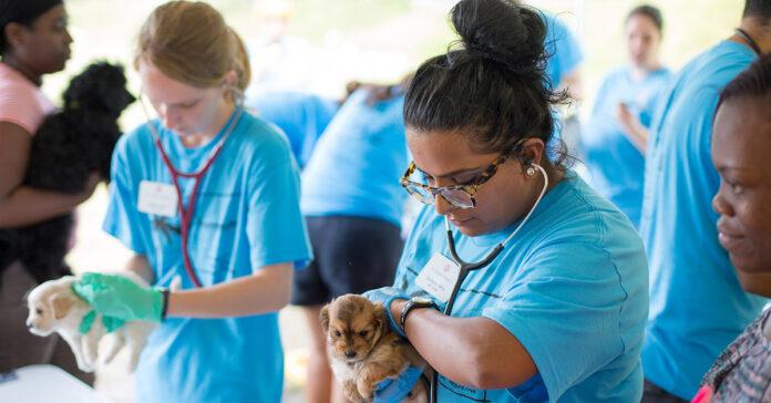 cane e veterinari