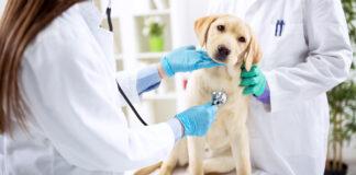 cane dalla veterinaria