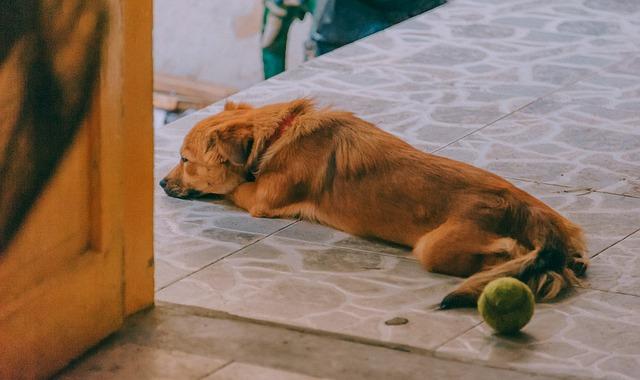 Foruncolosi interdigitale del cane: cos'è e cosa bisogna fare