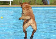 cane gioca in acqua