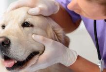 cane e veterinario