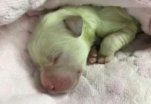 Hulk cane verde tornato bianco