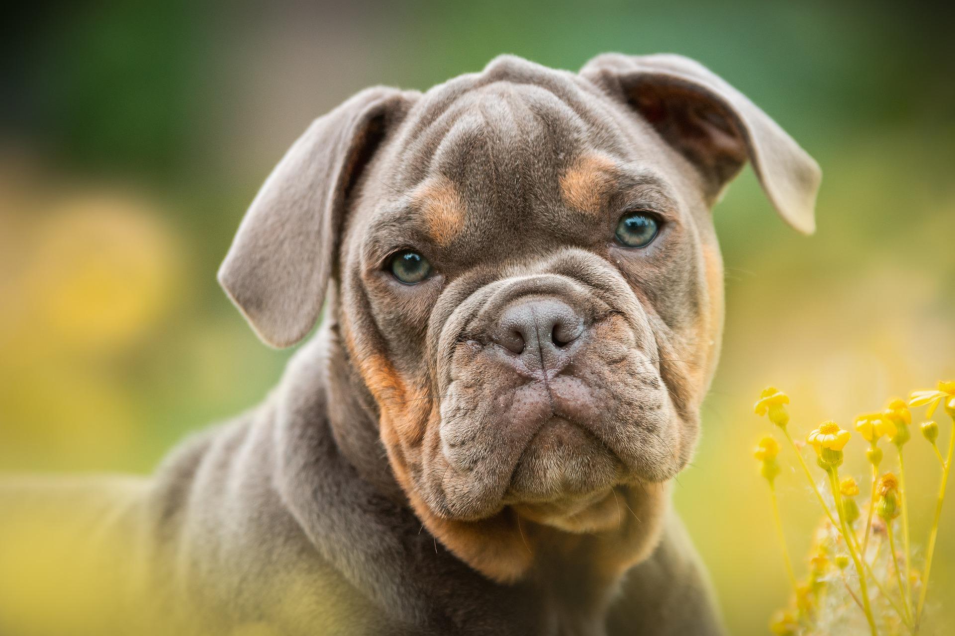 cane guarda favoritismi