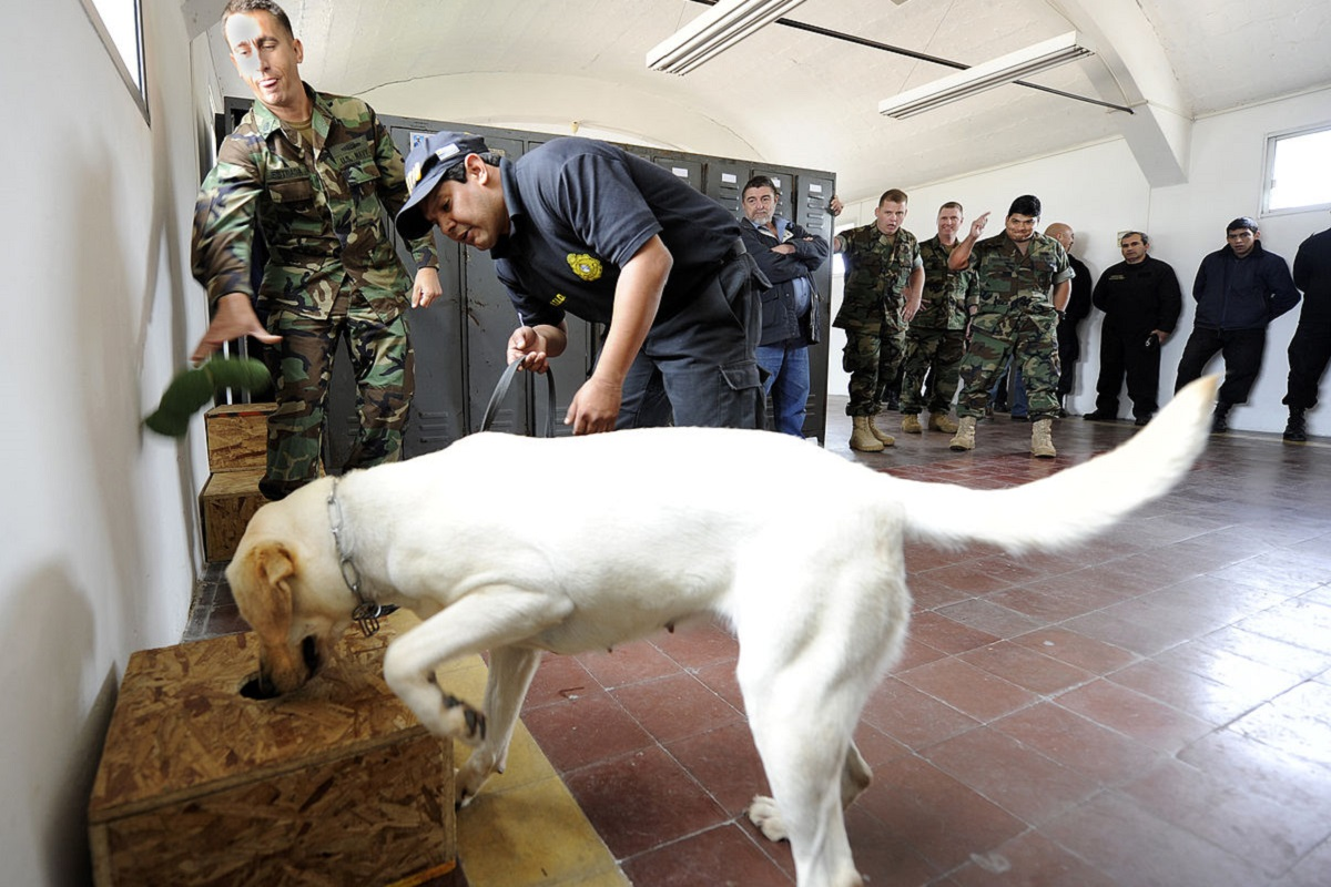 cane dell'esercito