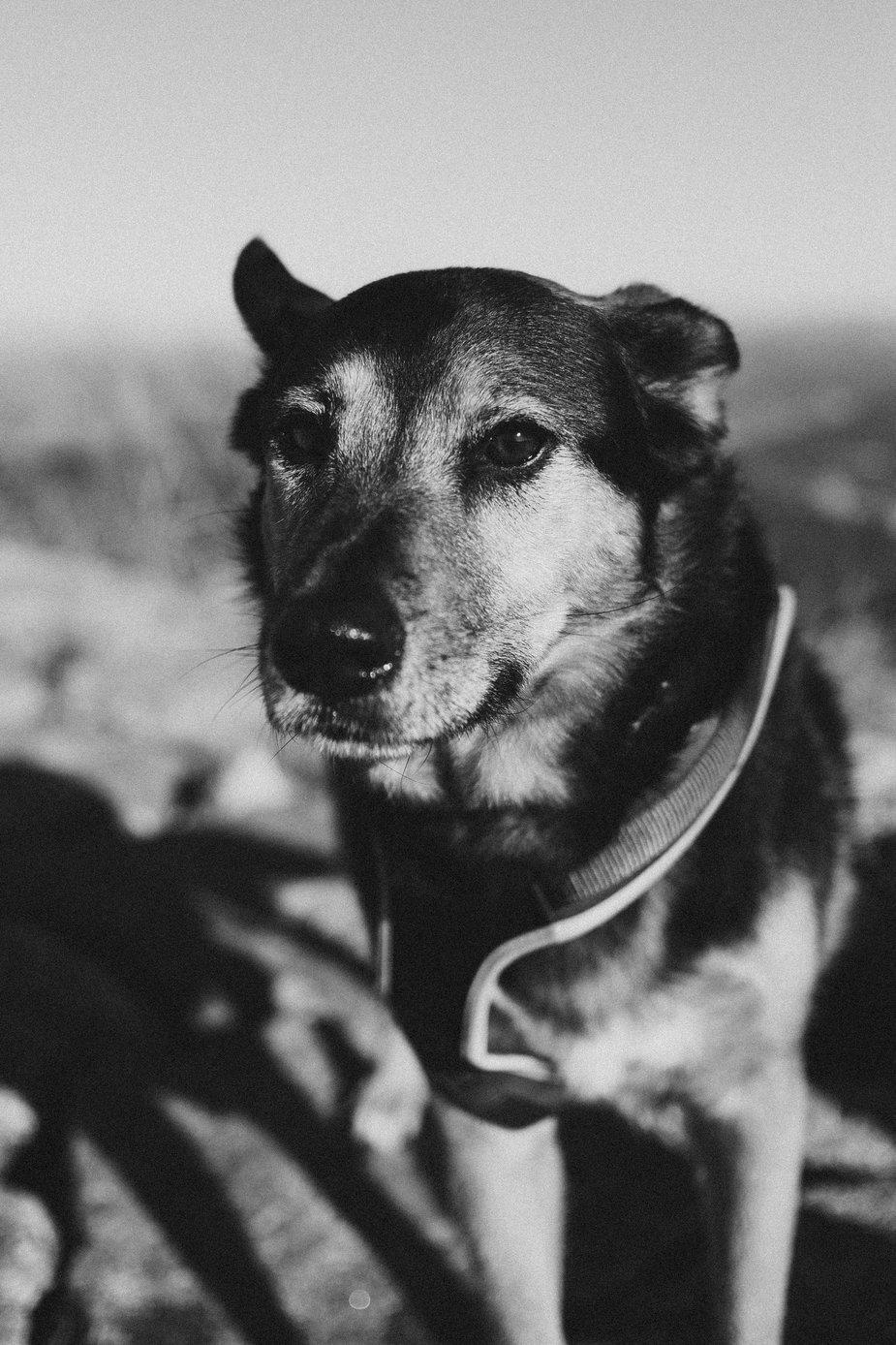 cane che ci dice addio