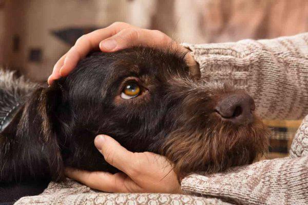 I cani possono imparare la lingua dei segni