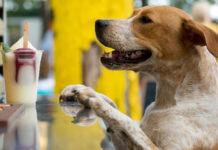 cane e cibo