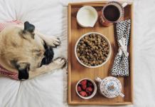 cane e colazione