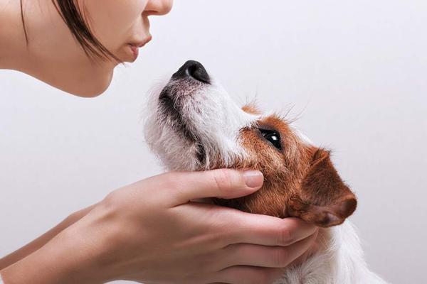Cane con proprietaria