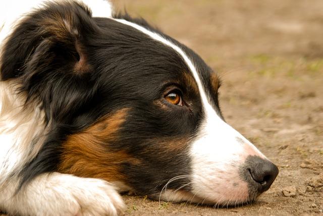 cane con cervicale