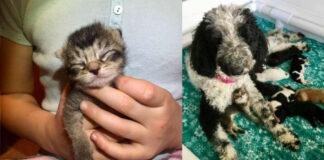 Cane che ha adottato un gattino