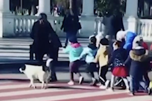 Cane che attraversa la strada con dei bambini