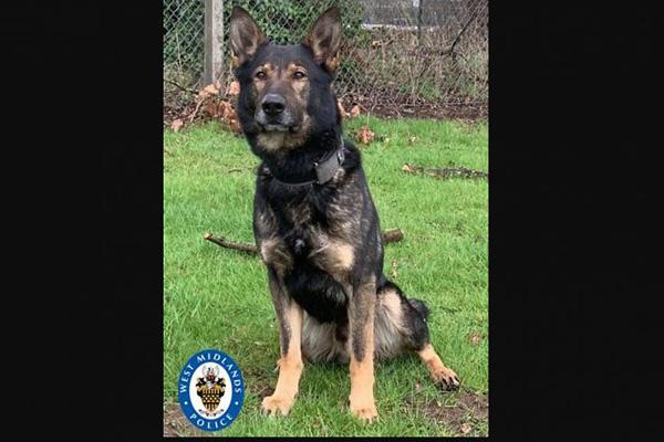 Cane poliziotto che osserva