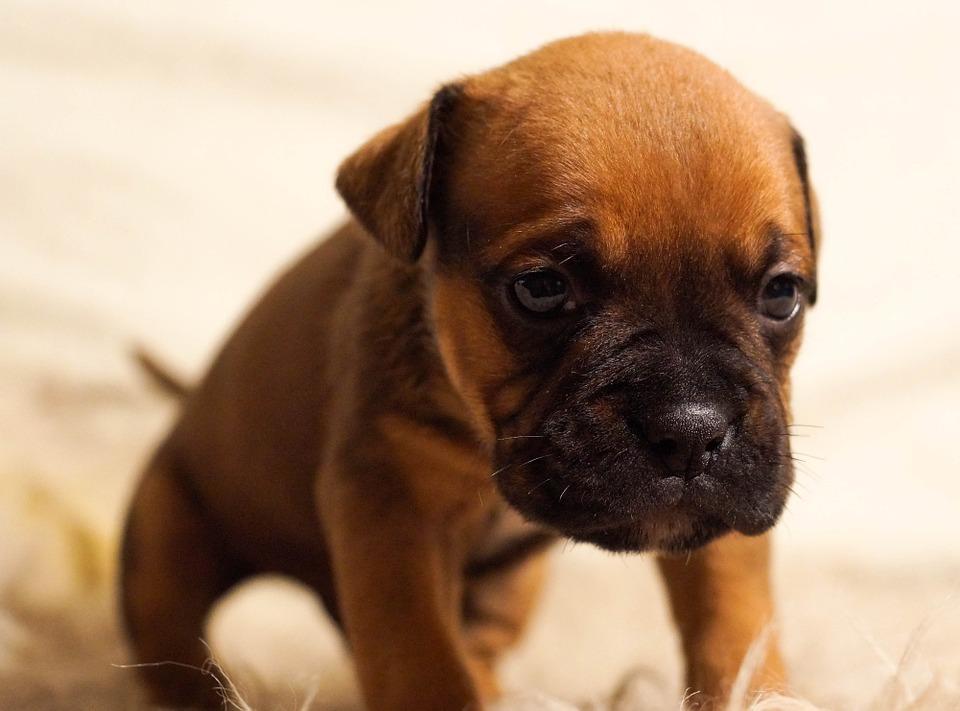 cane con malattia