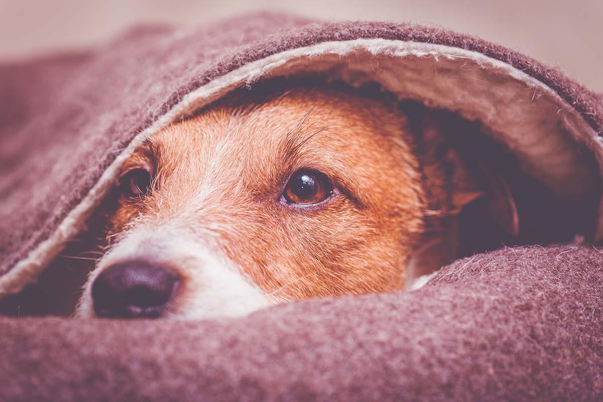Perché i cani aiutano chi soffre d'ansia? 4 ragioni per cui sono un toccasana