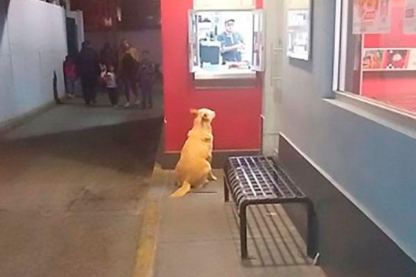 Cane seduto che aspetta