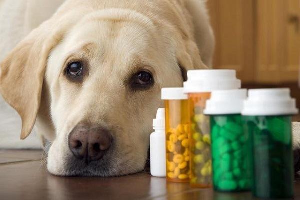cane e flaconi di medicine
