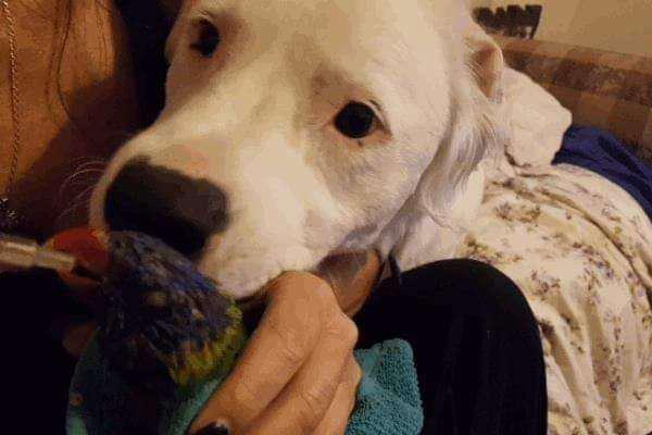 Cane con un pappagallo