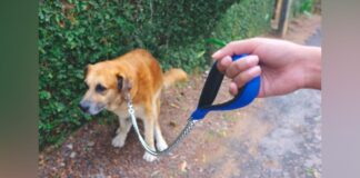 cane e bisogni