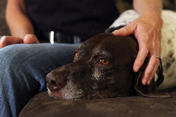 Surolan per cani: cosa sono queste gocce e a cosa servono