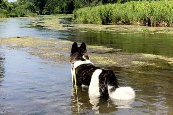 Cane in un lago