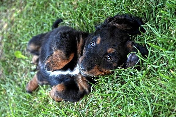 cane disteso sull'erba