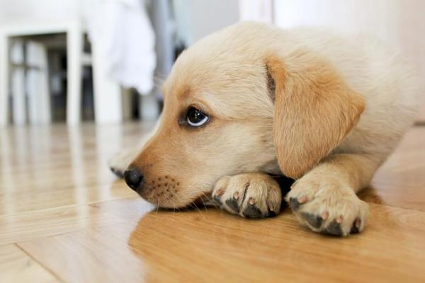 Tresaderm per cani: cos'è e come funziona questo medicinale