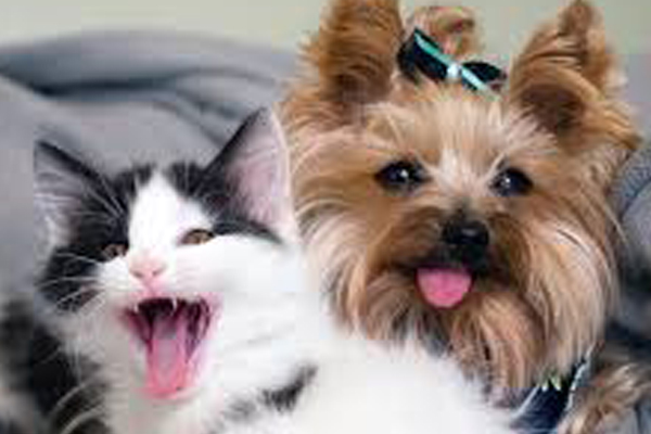 Cane con un gattino