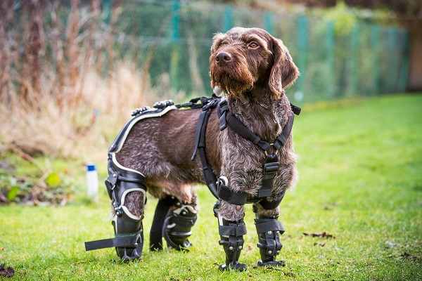 cane con protesi agli arti