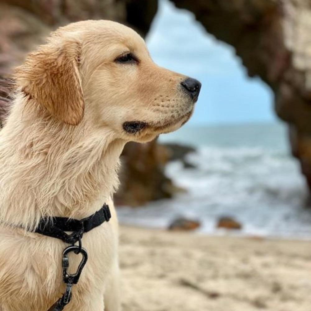bento-cane