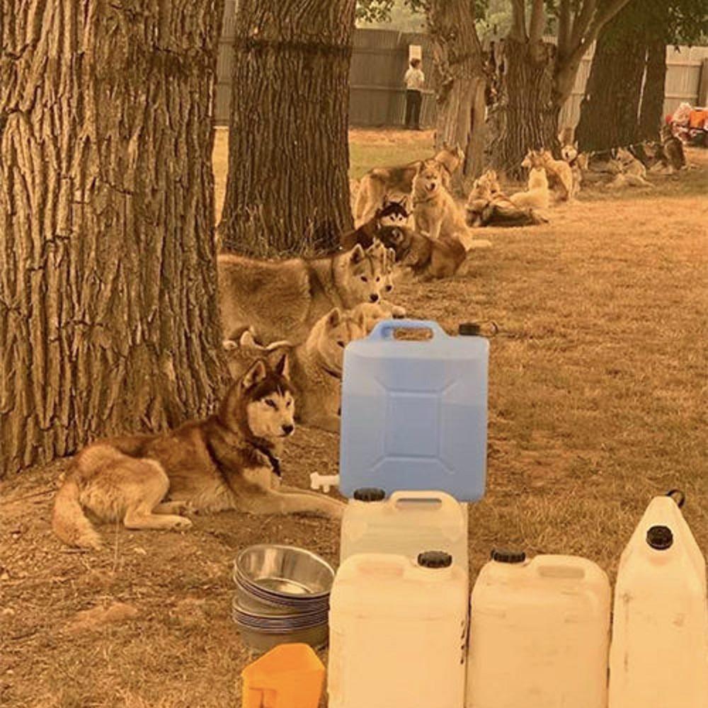 brett-cani