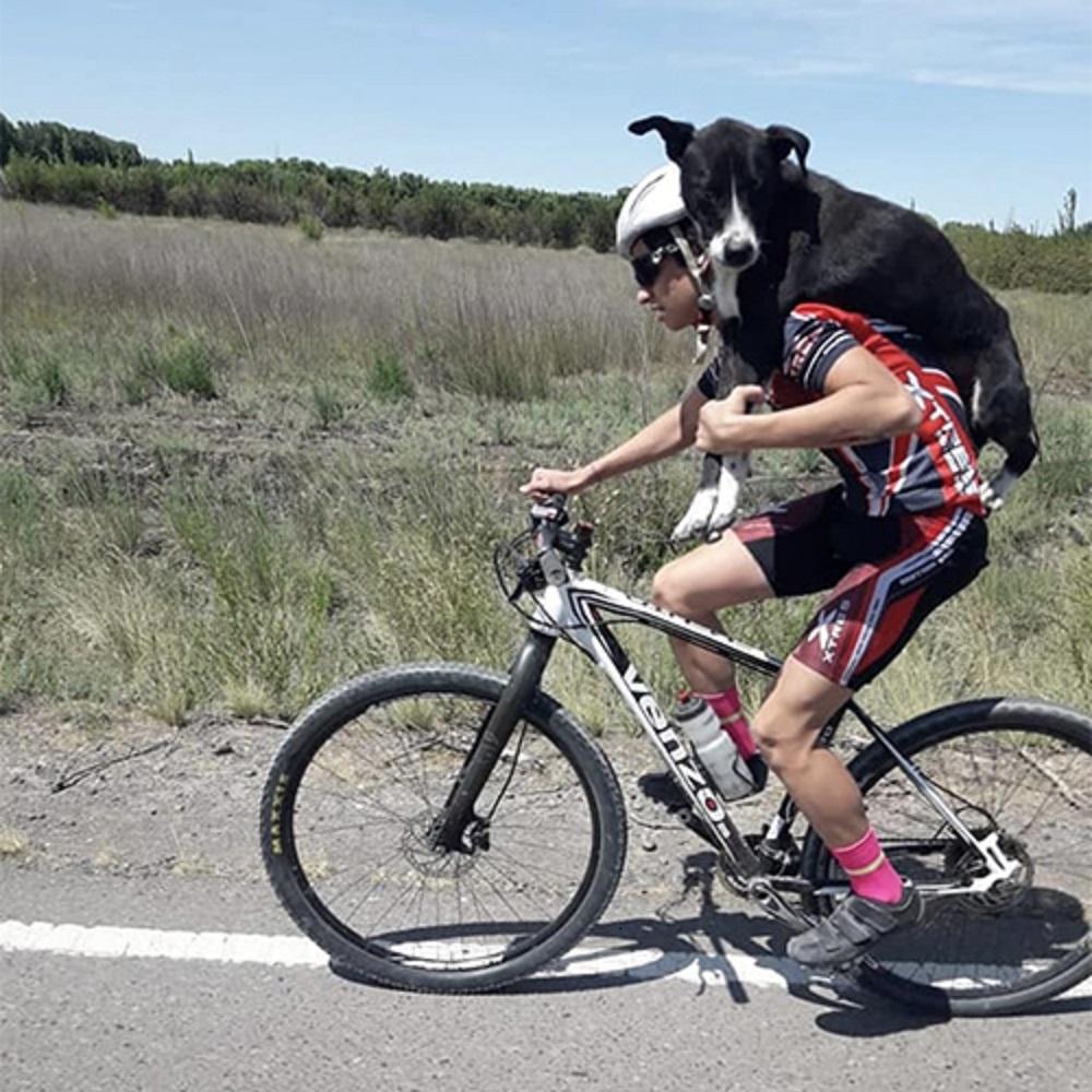 cane-argentina-vivo