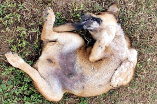 disturbo ossessivo compulsivo nel cane