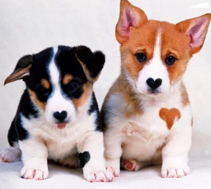 cane-cuccioli